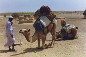 camel_one_previous_owner4
